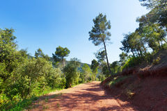 Mountainous road and pine trees. Montseny Royalty Free Stock Image