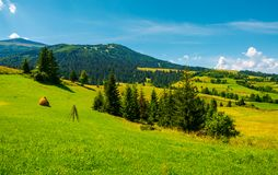 Mountainous rural area on a bright summer day. Rolling hills with haystacks and spruce forest. mountain ridge in the far distance Royalty Free Stock Images