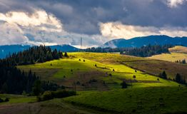 Mountainous rural area on a cloudy day. Gorgeous light on rolling hills with haystacks and spruce forest. mountain ridge in the far distance royalty free stock photos