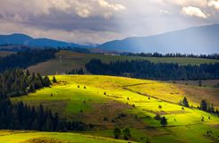 Mountainous rural area on a cloudy day. Gorgeous light on rolling hills with haystacks and spruce forest. mountain ridge in the far distance stock photo