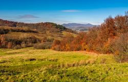 Mountainous rural area in late autumn. Trees with reddish foliage on green grassy hills. mountain ridge with high peak in the distance royalty free stock image