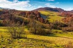 Mountainous rural area in late autumn. Trees with reddish foliage on green grassy hills. lovely weather on sunny day Stock Photography