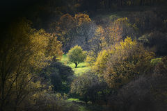 Mountainous tree. Autumn landscape: fall mountainous forest Royalty Free Stock Image