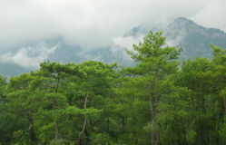Mountains. Pine forest in the mountains (Turkey Stock Image
