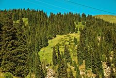 Mountains. Large coniferous forest, covered with green pine trees high in the mountains stock photo