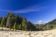 Mountains. Fir forrest in sinaia mountains, romania Stock Images