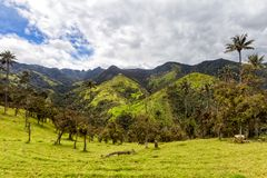 Mountains above Salento. Dramatic Andean valley with wax palms near Salento, Colombia royalty free stock photos