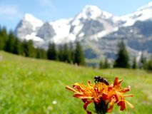 Insect on mountain flowers stock photo