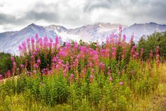 Mountains in Alaska. Picturesque Mountains of Alaska in summer. Snow covered massifs, glaciers and rocky peaks Stock Images
