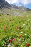 Mountains and alpine meadow royalty free stock photos