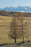 Mountains of Altai Stock Photography