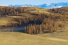 Mountains of Altai Royalty Free Stock Photos