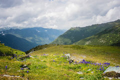 Mountains of Altay. Stock Image