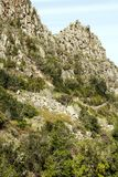 Mountains in the forest of Anaga. Mountains in the of Anaga on the island of Tenerife, Canary Islands Spain. It´s a vertical picture Royalty Free Stock Image