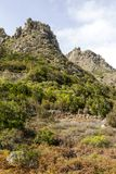 Mountains in the forest of Anaga. Mountains in the of Anaga on the island of Tenerife, Canary Islands Spain. It´s a vertical picture Royalty Free Stock Photos