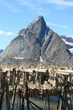 Mountains And Stockfish Of West Lofoten Royalty Free Stock Photography