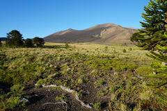 Mountains and Araucarias. Image of the mountain range steppe in the area of Araucania, Chile Royalty Free Stock Photos