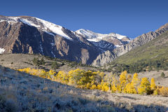 Mountains and Aspens Stock Images