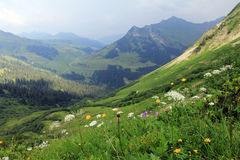 In the mountains of Austria. In summer the flowers blossom in the mountains of Austria Royalty Free Stock Photos