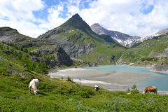 Mountains Austrian Alps Glacier Pasterze Stock Photography