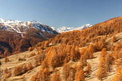 Mountains in Autumn Alps Piemonte Val di Susa Valle Argentera. Alpine view of mountains, Val di Susa, Piedmont, in autumn with golden forest of larches and warm Stock Image