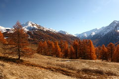 Mountains in Autumn Alps Piemonte Val di Susa Valle Argentera. Alpine view of Roc del Boucher, Valle Argentera, Piedmont, in autumn with golden forest of larches Royalty Free Stock Images