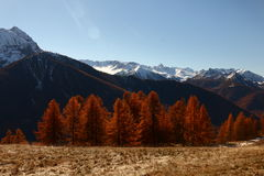 Mountains in Autumn Alps Piemonte Val di Susa Valle Argentera. Alpine view of mountains, Roc del Boucher, Valle Argentera, Val di Susa, Piedmont, in autumn with Royalty Free Stock Photo