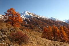 Mountains in Autumn Alps Piemonte Val di Susa Valle Argentera. Alpine view of mountains, Roc del Boucher, Valle Argentera, Val di Susa, Piedmont, in autumn with Royalty Free Stock Photos