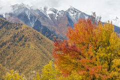 Mountains with autumn colors. Caucasus mountains in Georgia with trees in their autumn colors stock photo