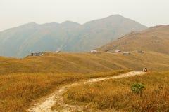 Mountains with autumn grasses. It was taken in autumn Stock Image