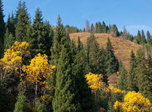 Mountains autumn panorama Royalty Free Stock Image