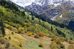 Mountains autumn snow. Nature season specific landscape: mountain descents by autumn covered by trees with green and yellow foliage and snow. Caucasus region Stock Images