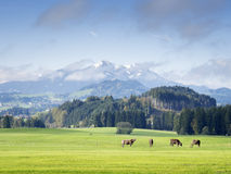 Mountains in Bavaria Stock Images