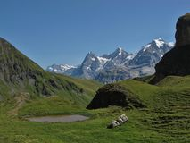 Mountains In The Bernese Oberland Royalty Free Stock Photo