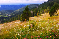 Mountains with blossoming meadows Royalty Free Stock Images
