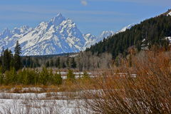 Mountains of blue. The  Grand Tetons in the spring Royalty Free Stock Photos