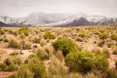 Mountains of Bolivia, altiplano stock photography