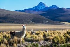 Mountains in Bolivia Stock Photos