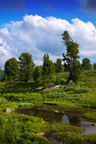 Mountains brook. In sunny day. Altai, Siberia royalty free stock photography