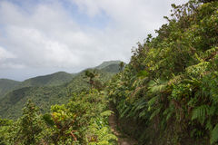 Mountains on Caribbean island of Dominica. Rainforest and mountains on Caribbean island of Dominica royalty free stock image