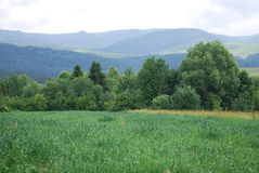Mountains Carpathians. Mountain landscape in a warm summer day Stock Photography