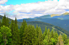 Mountains. In the Carpathians in the summer stock image
