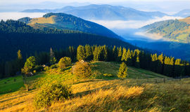 Mountains in the Carpathians Stock Image