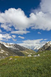Mountains in Caucasus. Summer mountains in Caucasus with flowers Royalty Free Stock Photo