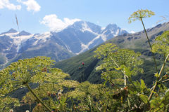 Mountains. Caucasus Mountains in summer. Glacier seven Stock Image