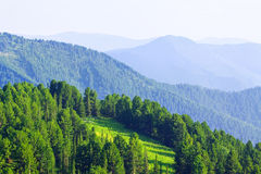Mountains  with cedar  forest Stock Photo