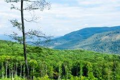 Mountains. Chynadiyovo. Zakarpattia. Ukraine. Mountains in Chynadiyovo. Zakarpattia. Ukraine Stock Photography