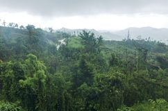 Mountains and Cloud Forest of Jayuya stock images