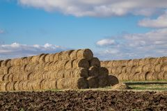 Mountains collected in a roll of hay bales for further processing and animal feed. We are storing food for cattle such as cows, sheep, goats, rabbits, chickens Stock Photo