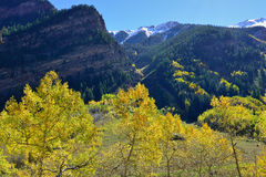 Mountains with colorful aspen during foliage season Royalty Free Stock Image